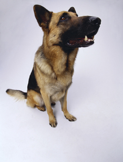 Canine-Physiotherapy