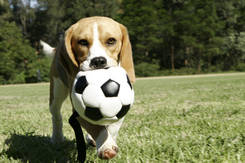 Exercising-With-Your-Pooch