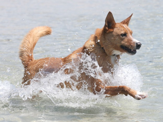 Dog Care - Healthy diet for dogs