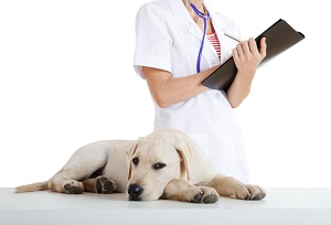 bigstock_Veterinay_Taking_Care_Of_A_Dog_6477739