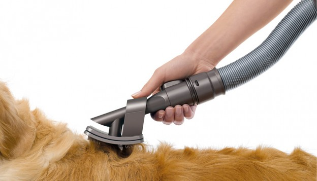 diy dog grooming
