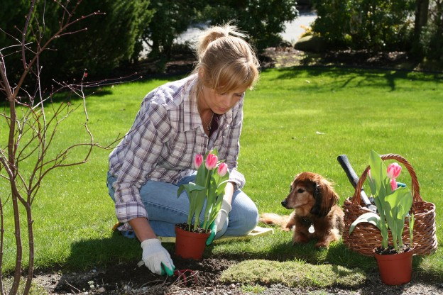 Plants toxic to dogs Dogslife Dog Breeds Magazine – Garden Plants Toxic to Dogs