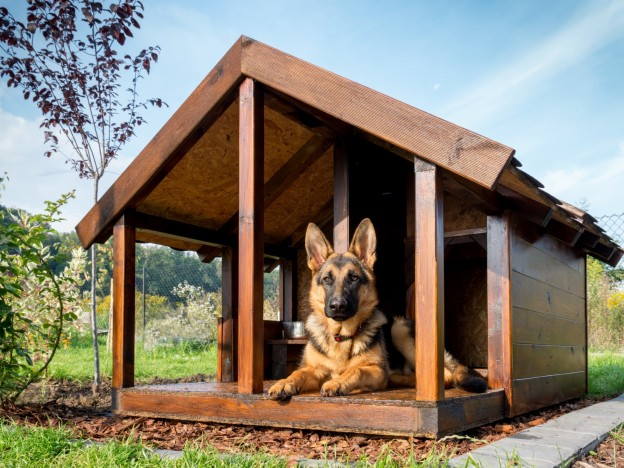 Diy Dog Kennel Building Tips Dogslife Dog Breeds Magazine