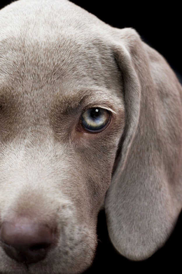 Can You Catch Gastroenteritis From Dog