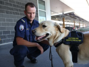 Detector dog and ACBPS handler