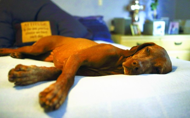 Treating canine edema