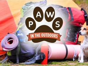 paws in the Outdoors