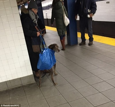 Dogs-on-New-York-subway