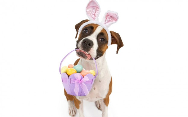 dog-Easter-egg-hunt