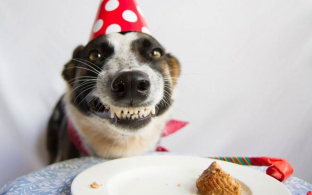 Dog-birthday