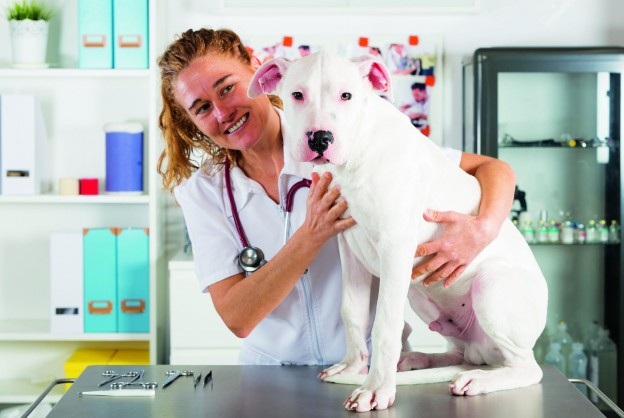 Pet Insurance: What to consider