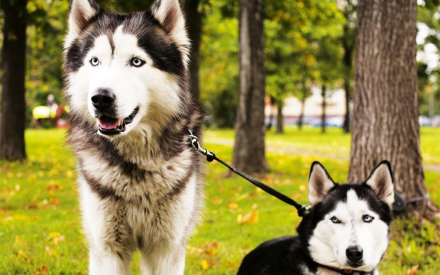 7 common winter dog care myths busted