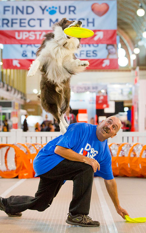 DogsLife has FIVE double passes to the Brisbane Dog Lovers Show to give away!