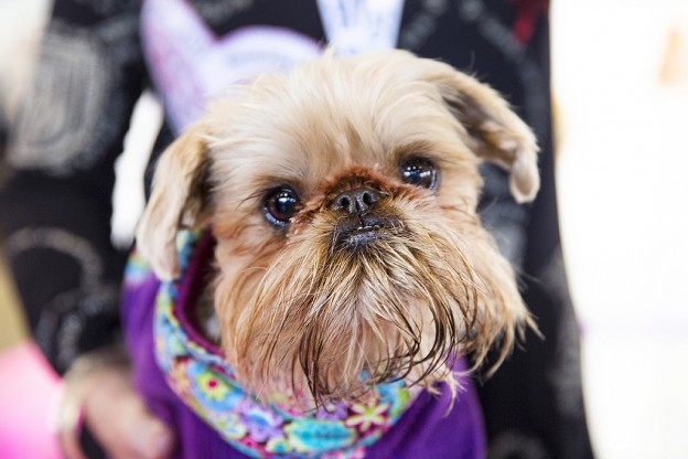 DogsLife has FIVE double passes to the 2017 Sydney Dog Lovers Show to give away!
