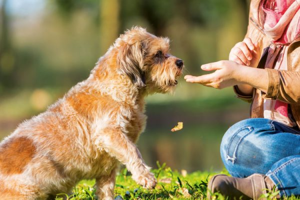 Training the un-trainable: make training easy for difficult dogs